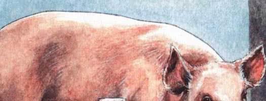 Свинья-сестра — русская народная сказка