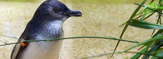 Маленький пингвин Рой — аудиосказка Биссета