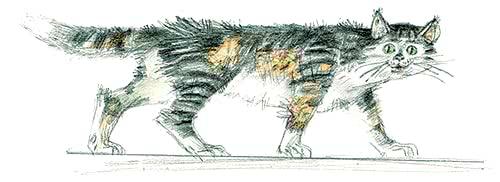 Сравнительно умная кошка — аудио рассказ Зощенко