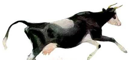 Бодливая корова — Ушинский К.Д.