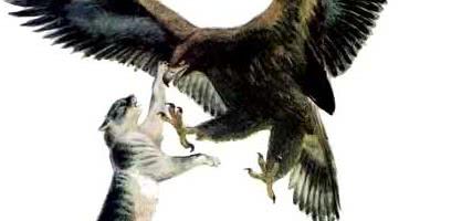 Орёл и кошка — Ушинский К.Д.