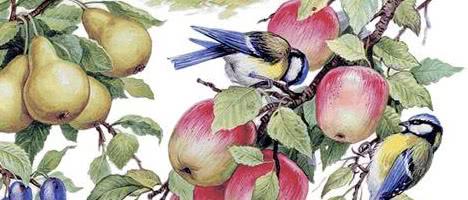 Птицы — Ушинский К.Д.