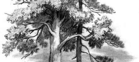 Спор деревьев — Ушинский К.Д.