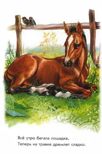 Домашние животные на ферме