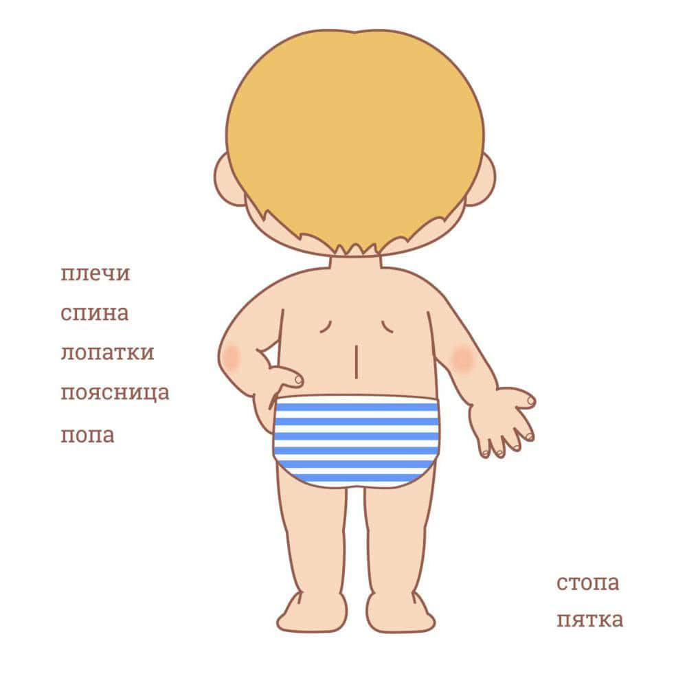 Части тела