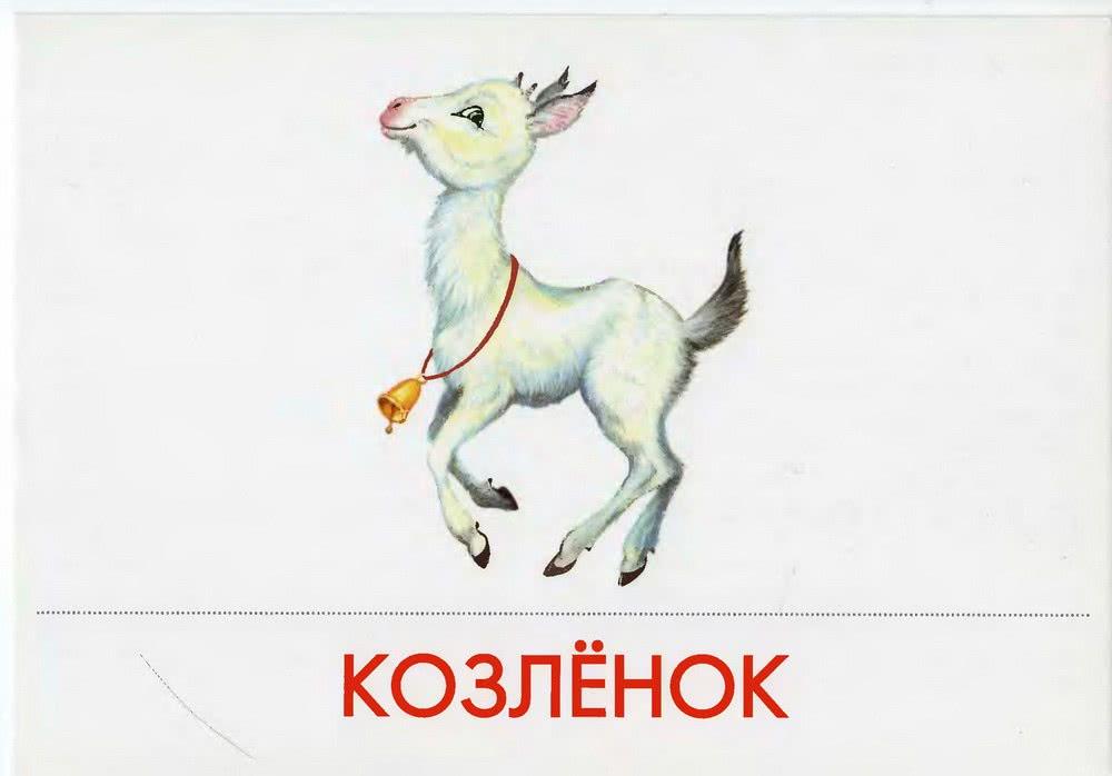 Домашние животные. Дидактические карточки.