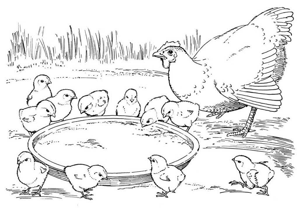 запретом птичий двор раскраска для малышей плевы может