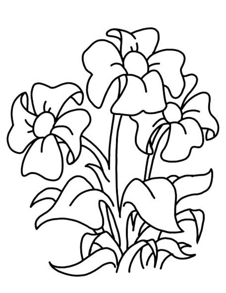 Открытки, открытка цветочки раскраска