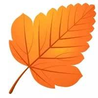 Раскраски Листья