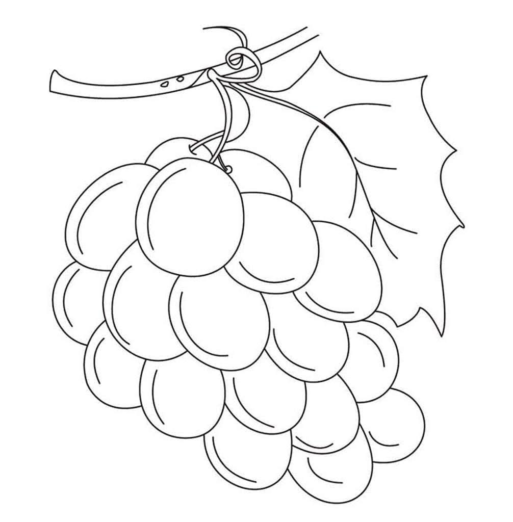 Анимации ландыши, картинка виноград для детей раскраска