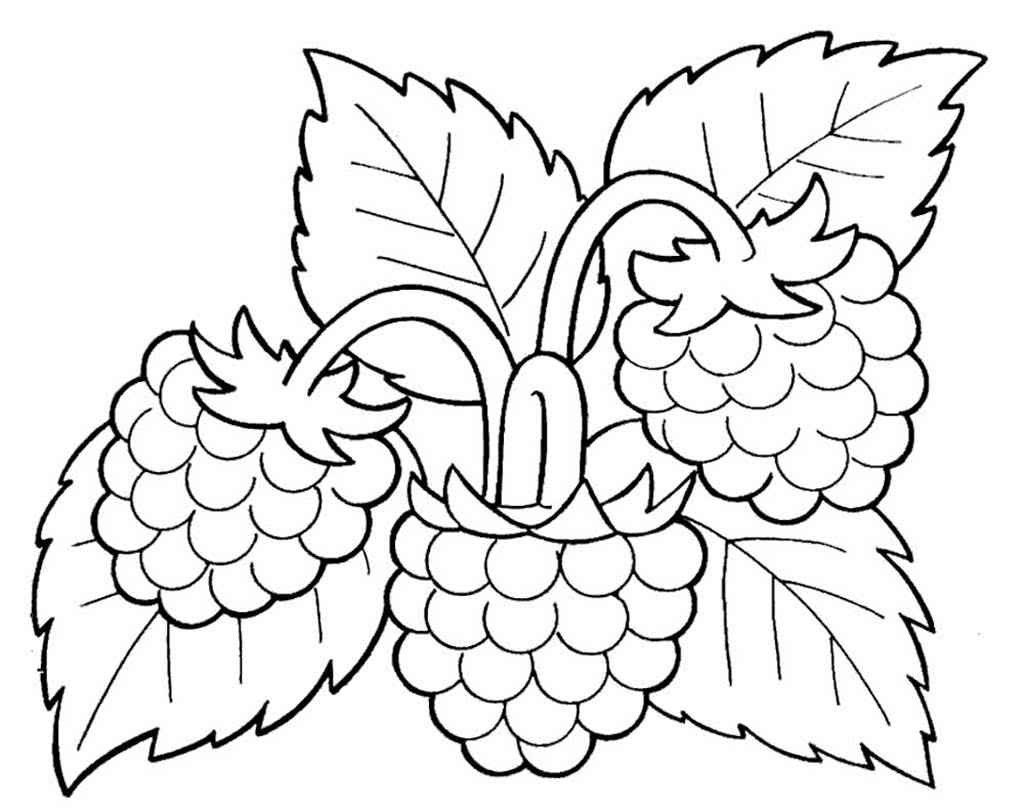 Картинки раскраска малина