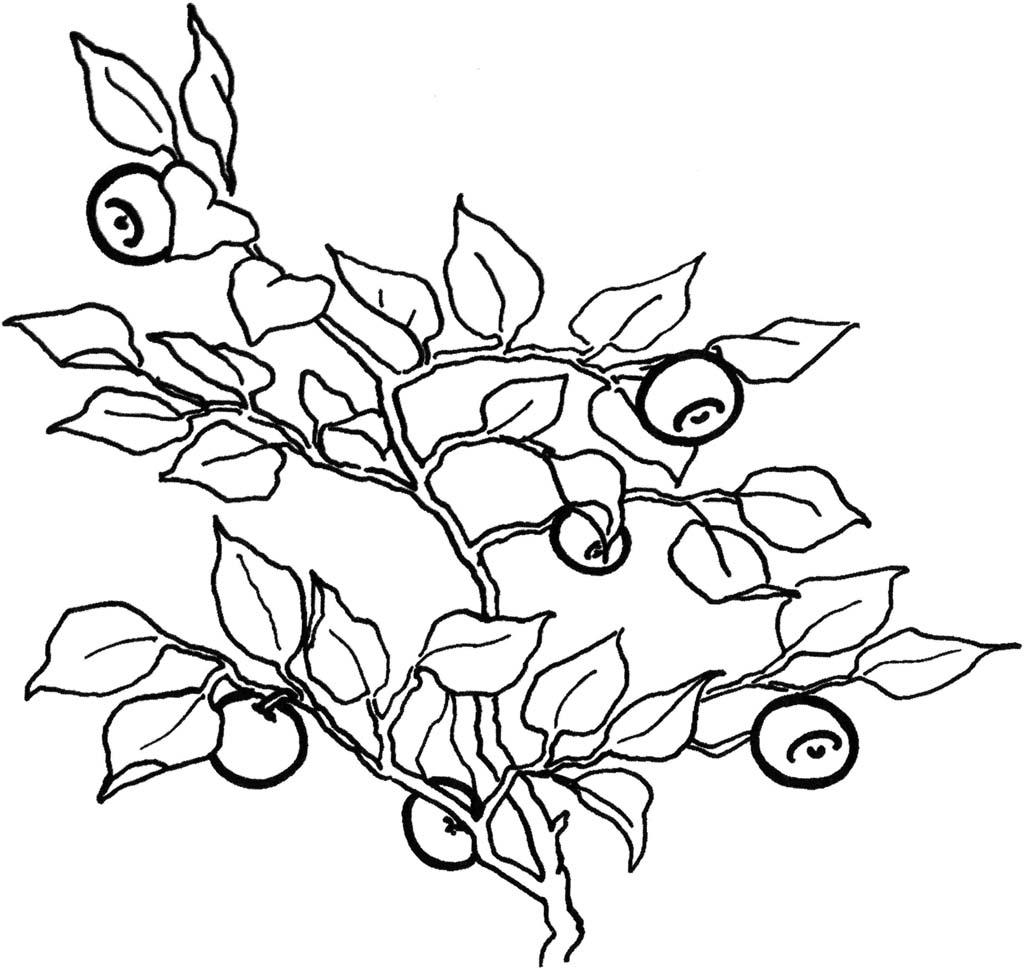 Раскраски Ягоды