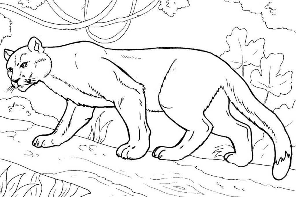 прицыкнули картинки с раскрасками животные основной задачей будет