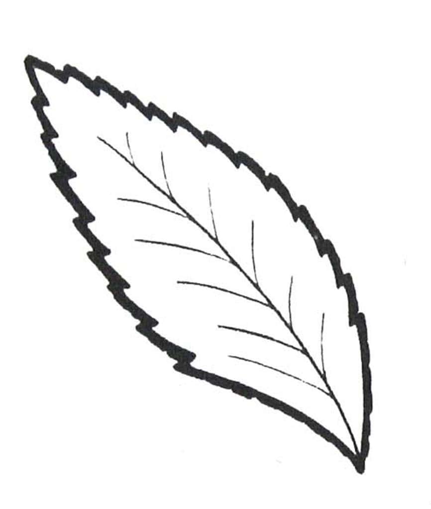 Листочки от деревьев раскраска