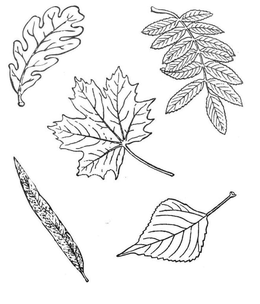 картинки для рисования листья деревьев купить