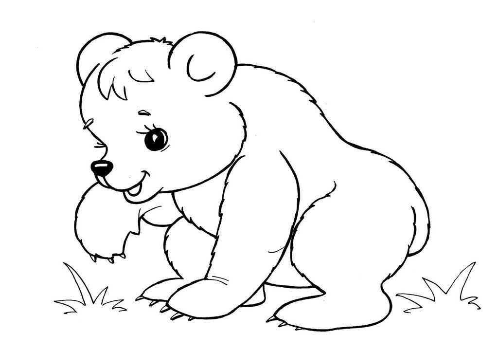Раскраски диких животных картинки для детей
