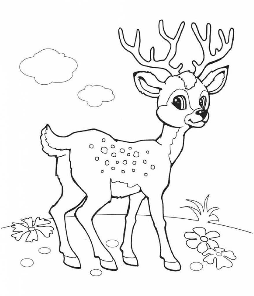 Рисунки животных оленей раскраски