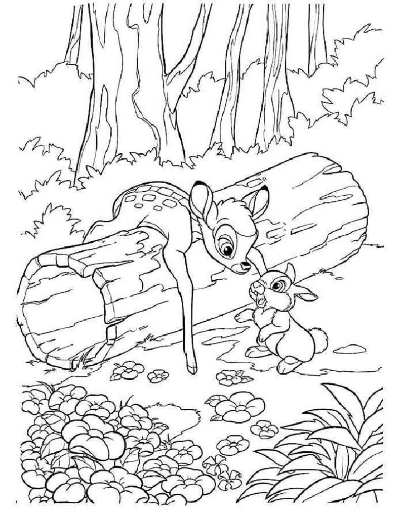 Раскраски Животные леса