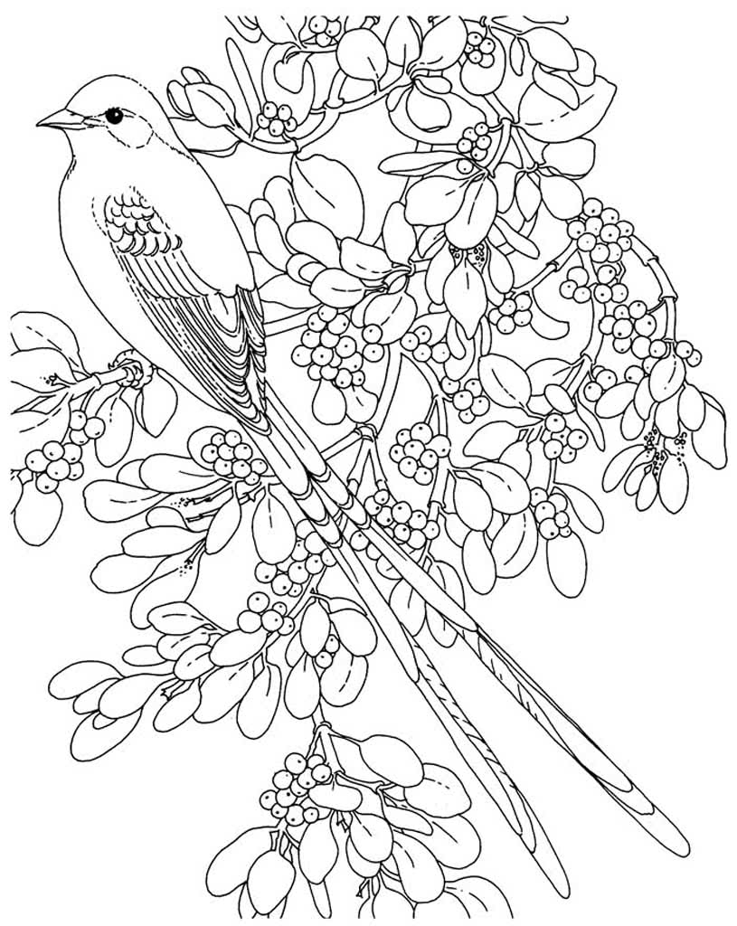 Картинки для раскрасок птиц