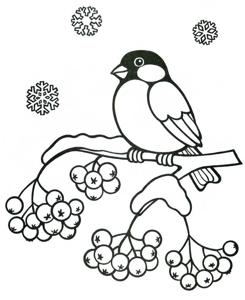 Раскраски Птицы