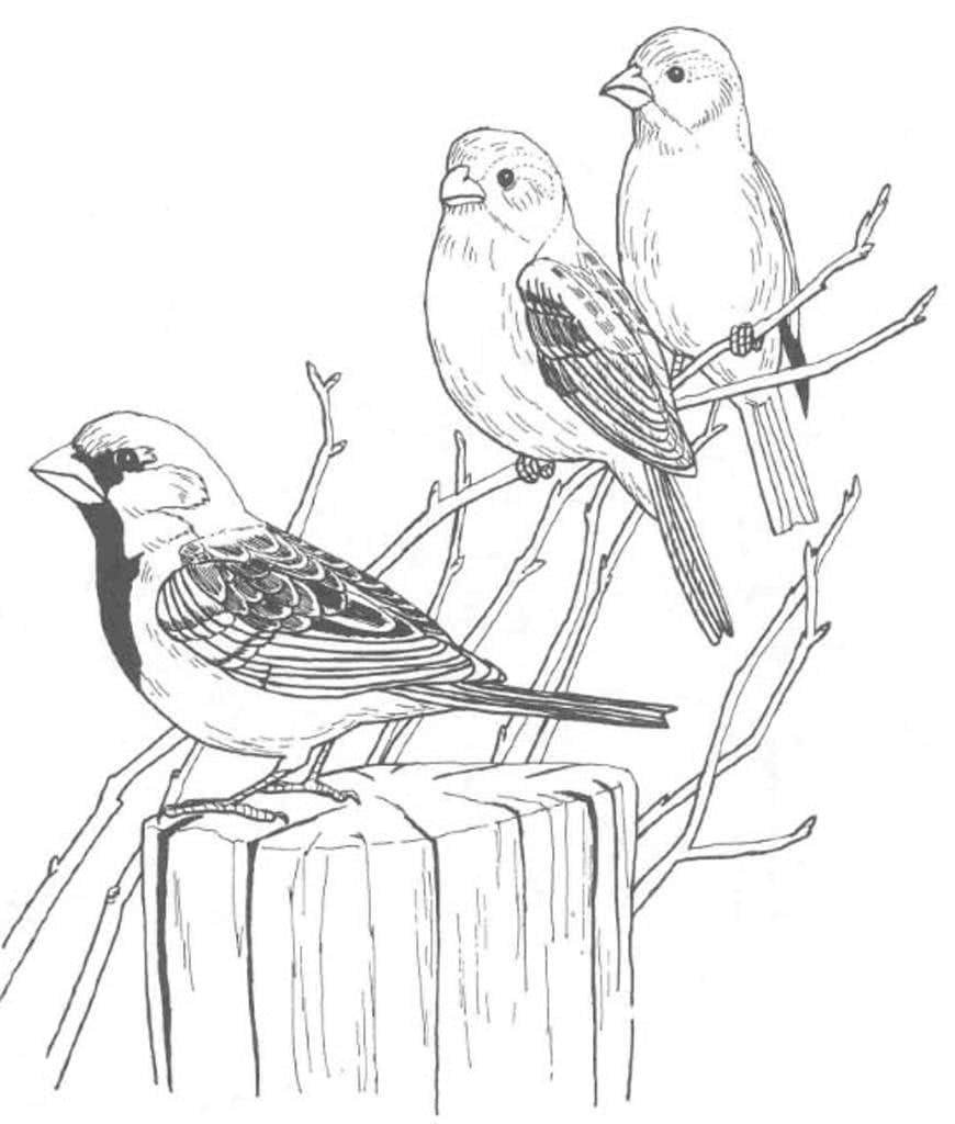 Черно-белые картинки птиц для распечатки с двух сторон архитектонические
