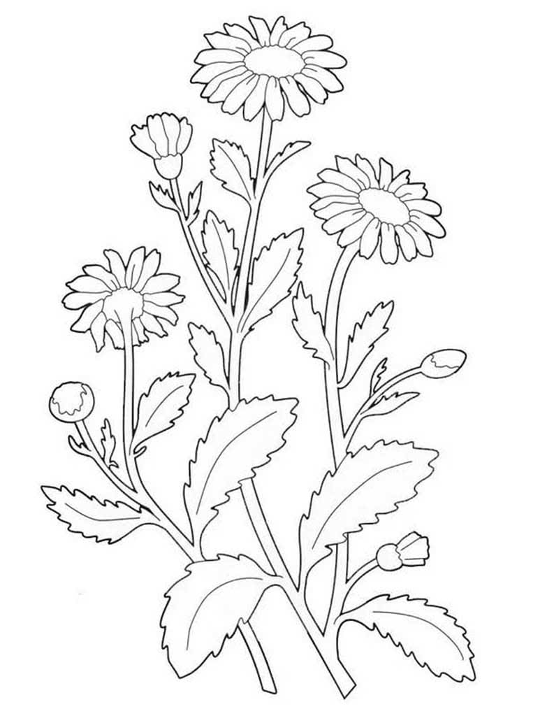 говоря, картинки раскраски про растения вкус