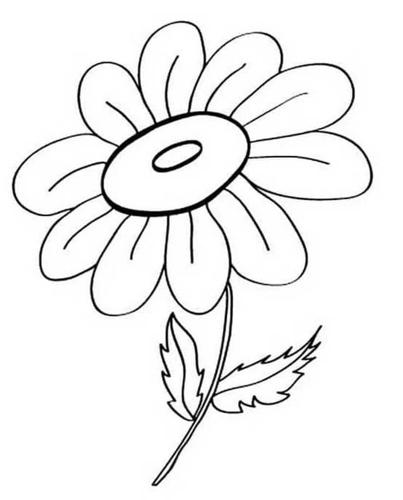 картинки цветов на белом фоне для раскрашивания всем рукодельницам вдохновения