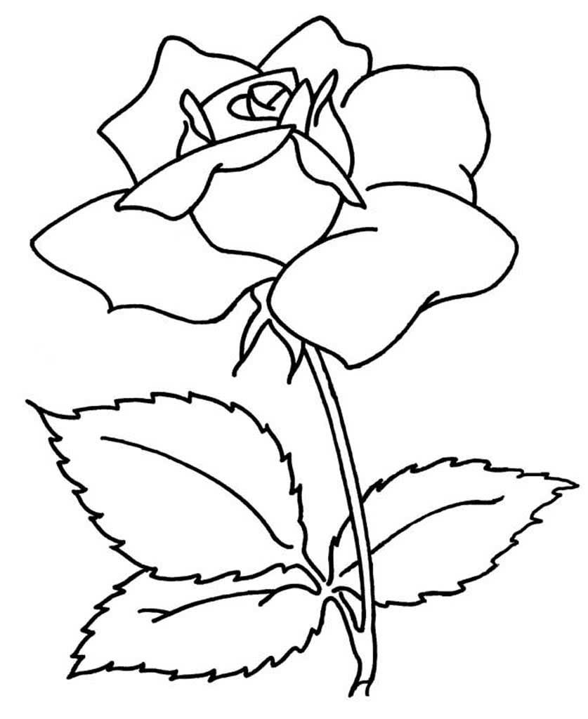 красивые цветы картинки чтобы можно скопировать