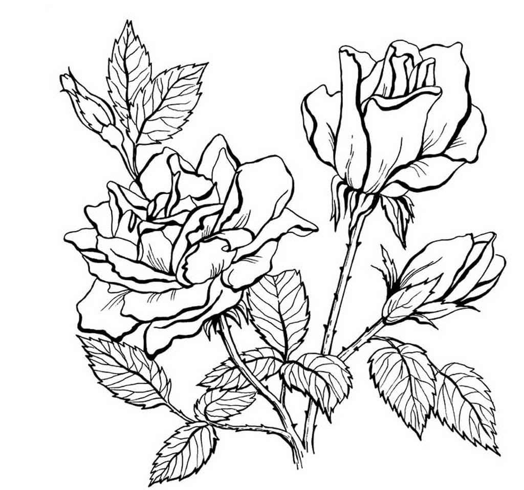 Цветок роза раскраска для детей распечатать
