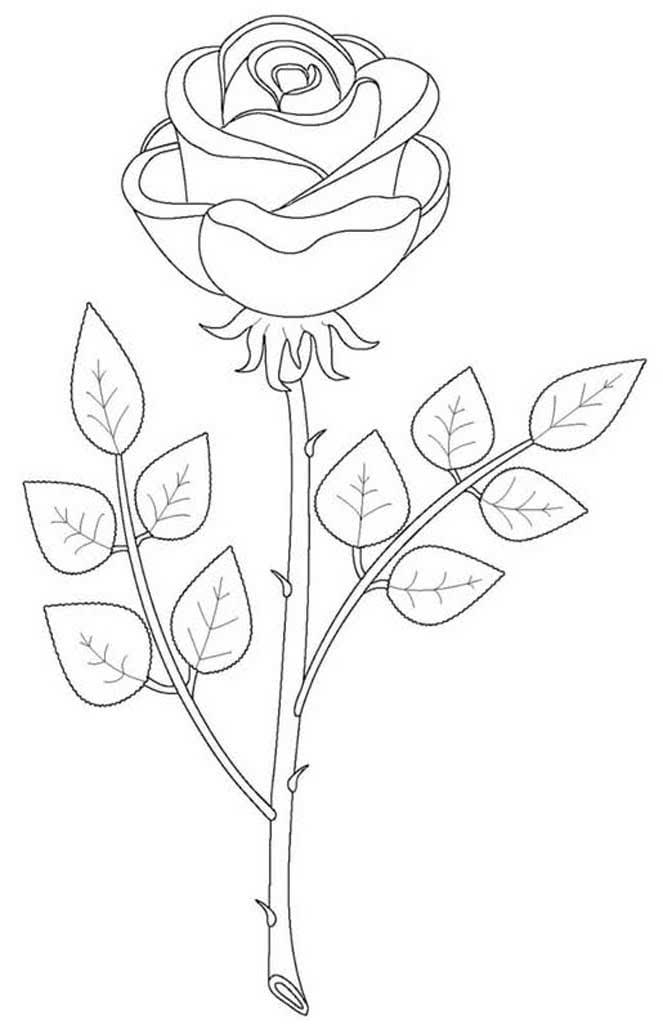 Для, раскраска розы