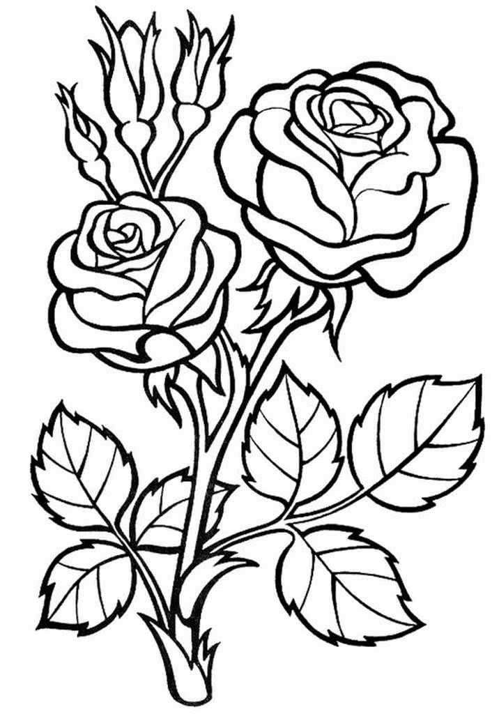 Не разукрашенные картинки цветы