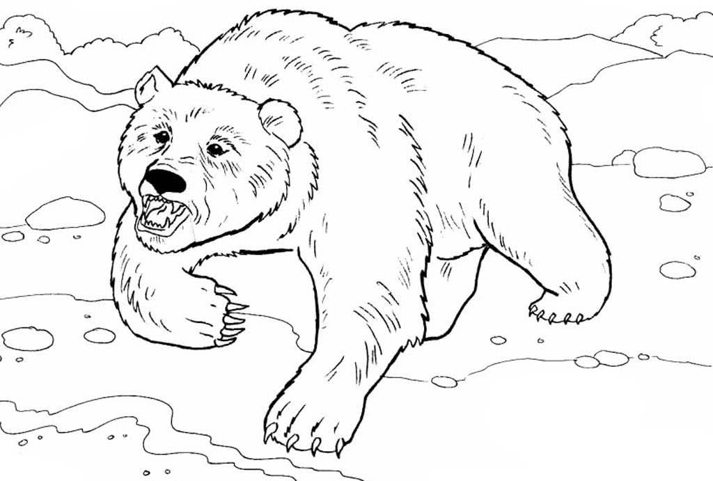 валенсия рисунок медведя для раскрашивания таком случае