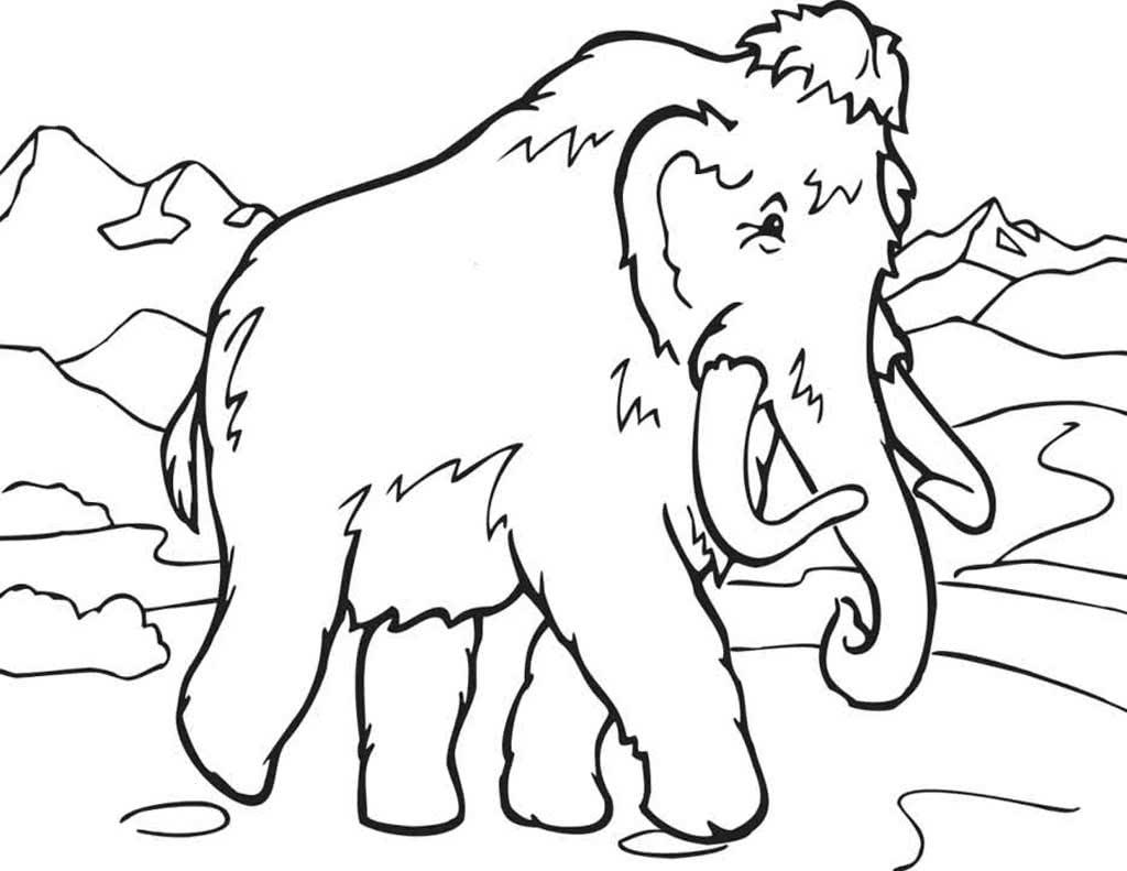 Раскраска северные животные