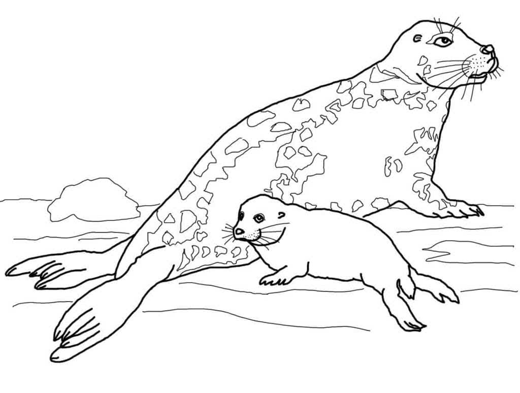 Картинки строение клеток животного матери