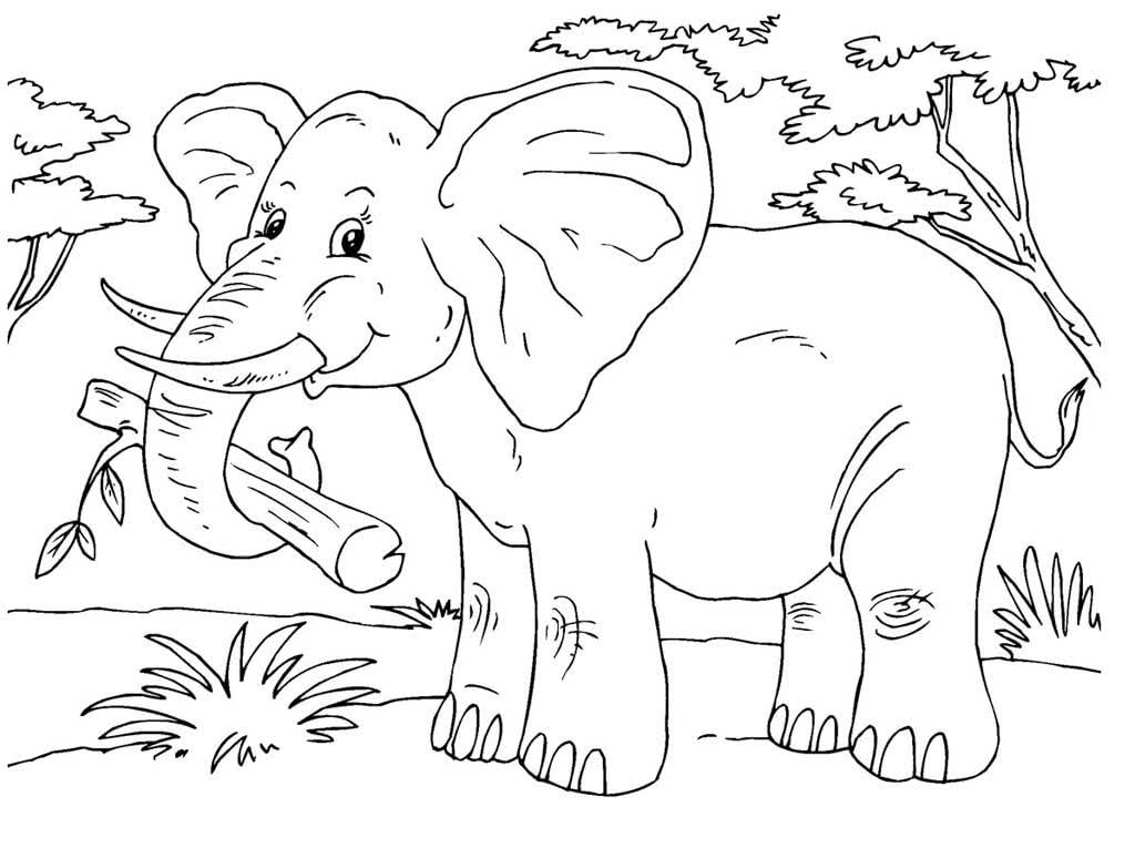Животные жарких стран раскраска для детей