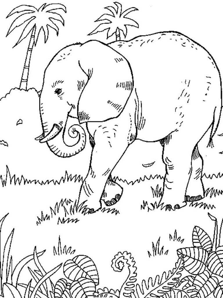 Африка картинки животных раскраски