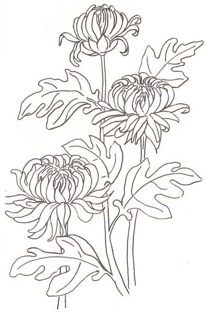 раскраска цветок астра распечатать словам