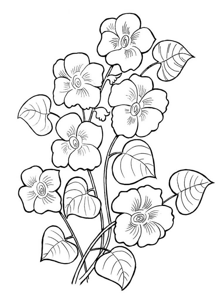 Прикольные, раскраски цветы распечатать формат а4 для девочек