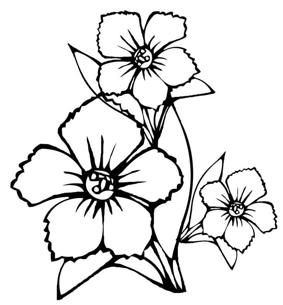 Картинки цветы черно белые для детей