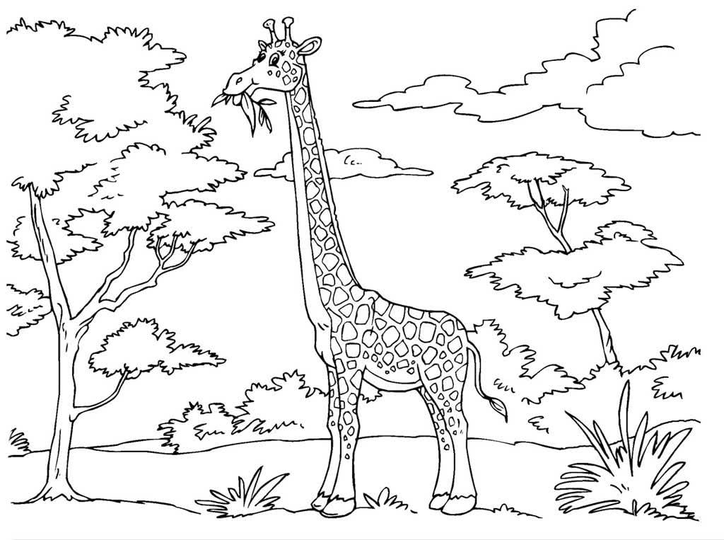 Красивые картинки животных и природы для детей трафареты для срисовки