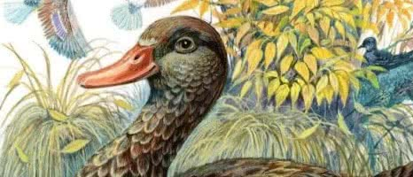 Анюткина утка — Бианки В.В.