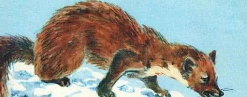 Маленькие рассказы: Голубой зверек — Бианки В.В.