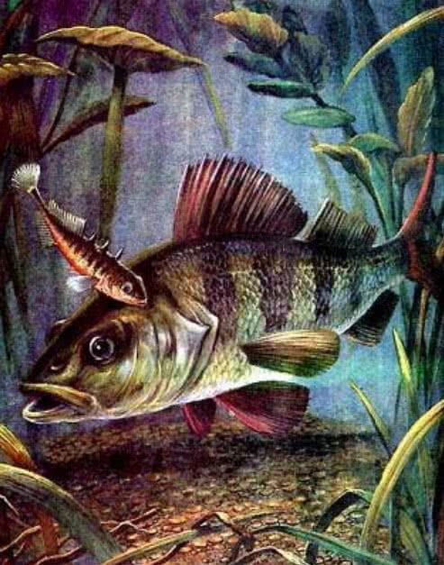 Рыбий дом - Бианки В.В.
