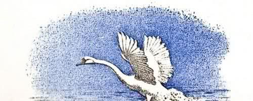 Лебеди — аудио рассказ Толстого Л.Н.