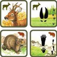 Учим следы и рацион лесных животных