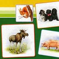 Животные наших лесов, домашние животные. Набор карточек.
