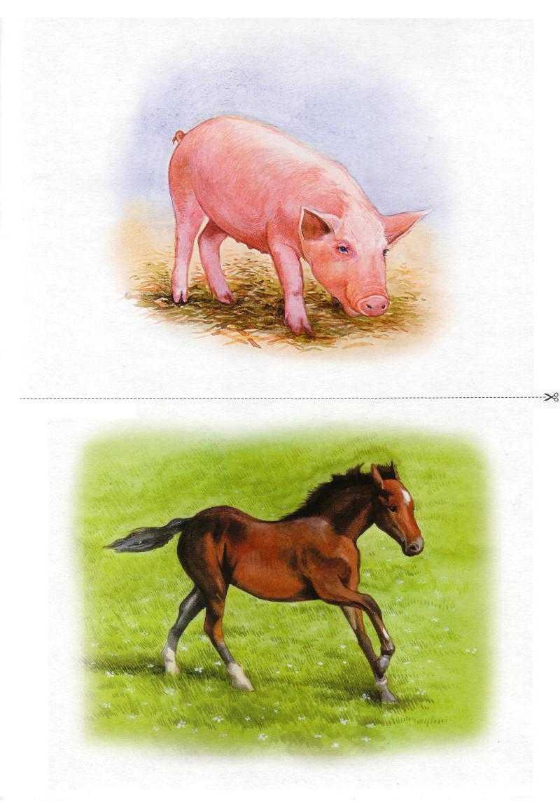 Картинки с домашними животными и их детенышами, французском