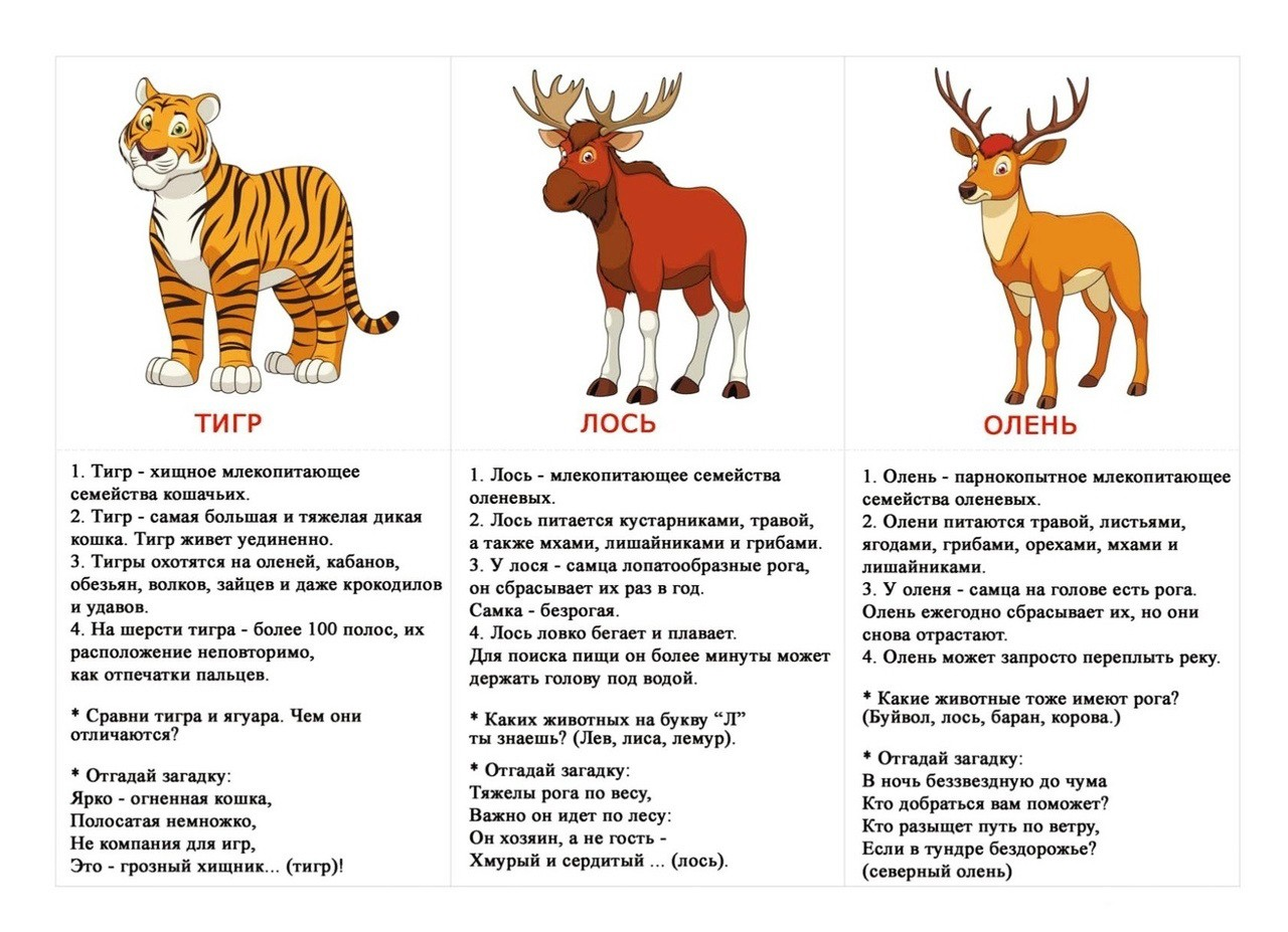 """Карточки """"Животные"""". Интересные факты и загадки."""