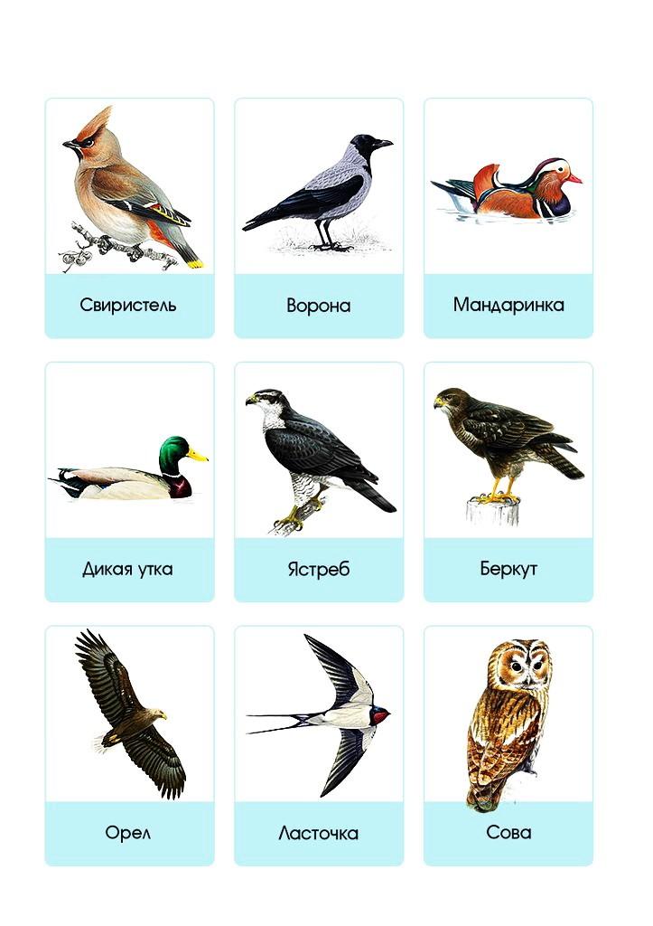 Карточки. Птицы.