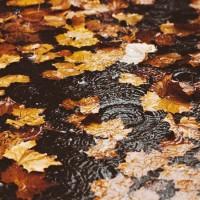 Дождик за окном моросит - песня про осень
